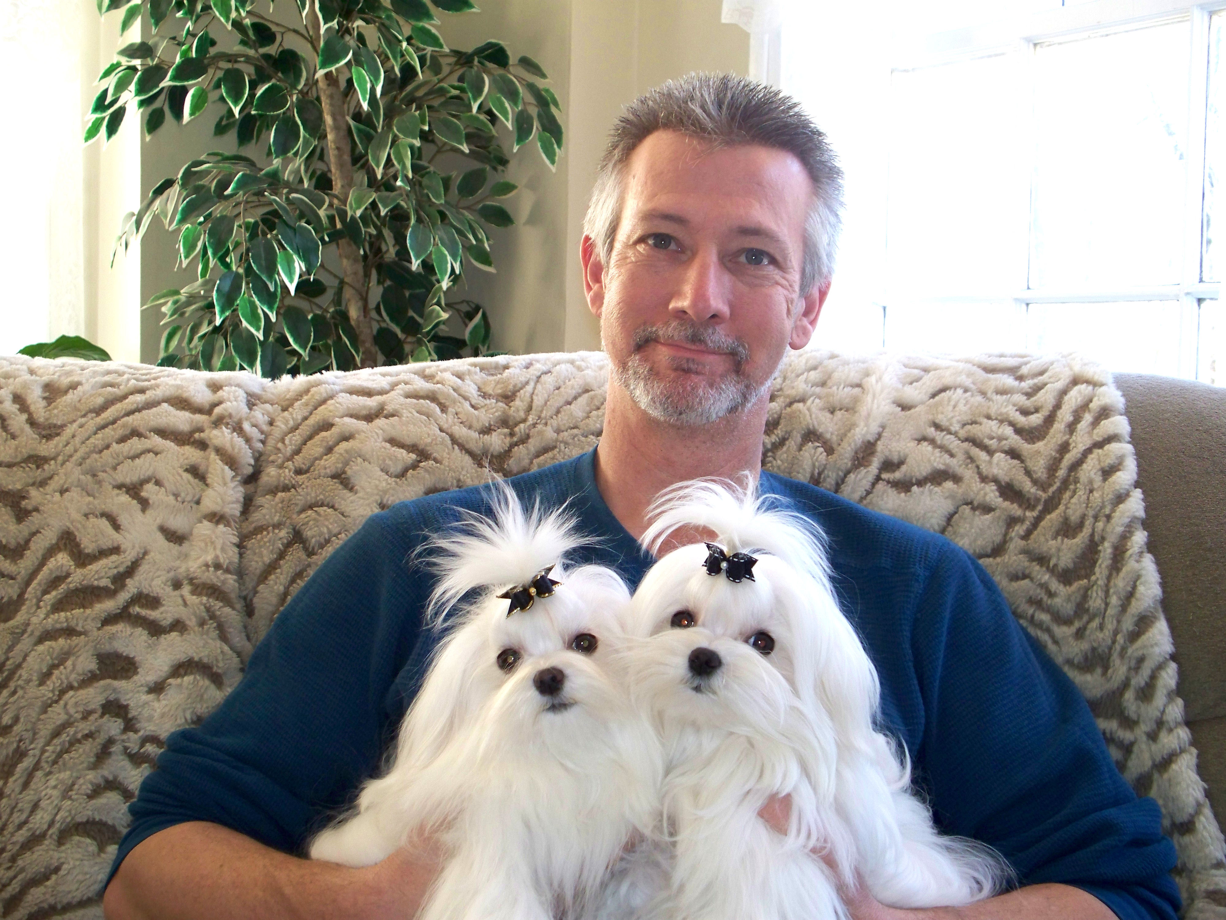 About Us And Our Maltese Dogs Maltese Puppies