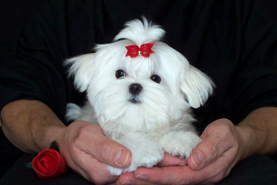 Pictures Of Dogs For Sale In Texas